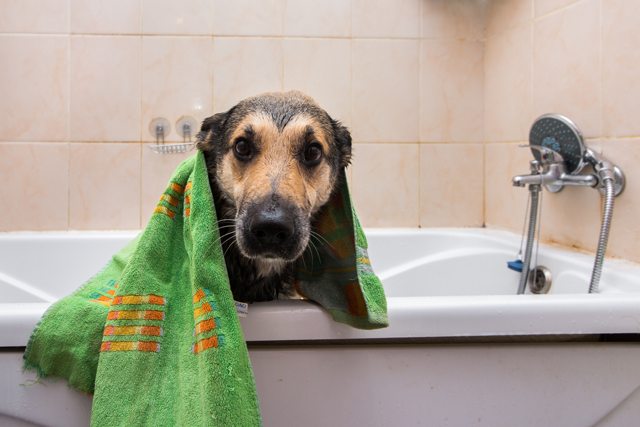 Pet Smells and Odours Can Reduce The Value of Your Home