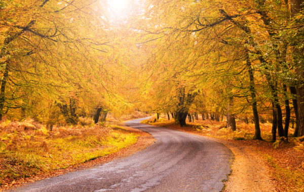 Route through orange and golden trees in the New Forest
