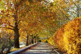 beautiful trees in the city street, autumn season