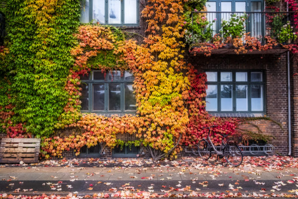 Building in Copenhagen with bright colored leaves showing the change of summer into autumn.